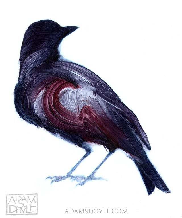 bird, Adam S. Doyle: Bird Paintings, Birds Art, Inspiration, Art Paintings, The Artists, Adam Doyle, Birds Paintings, Brushes Strokes, Gorgeous Birds