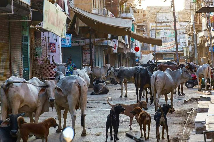 Early moring at Market Jaisalmer Rajasthan India