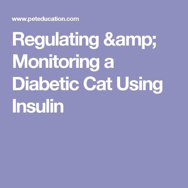 Regulating & Monitoring a Diabetic Cat Using Insulin