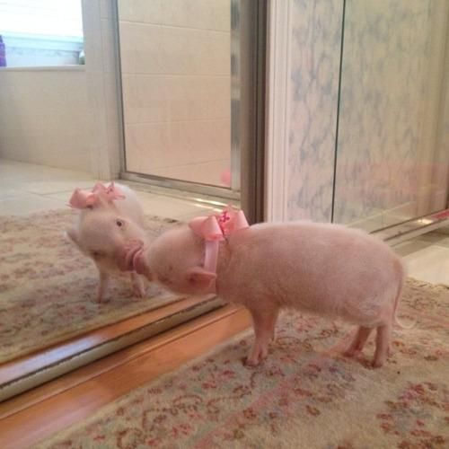 when your outfit on point and you can't help but kiss yourself