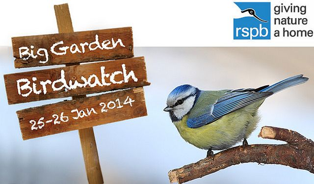 This is the best weekend of the new year because it's RSPB's annual Big Garden Birdwatch!