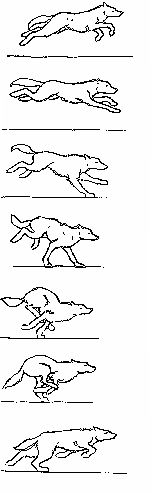 Wolf run cycle: Frame by frame by Dolorr.deviantart.com on @DeviantArt