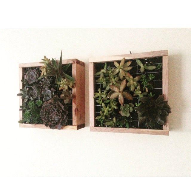 #hangingGarden #maticas #mymaticas #garden #woodwork #succulents #cactus #homedecore