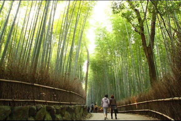 Join Kyoto Arashiyama Bamboo and Tenryu-ji Private Tour - Kyoto Tours, Activities & Things to do in Japan | Kyoto | Voyagin
