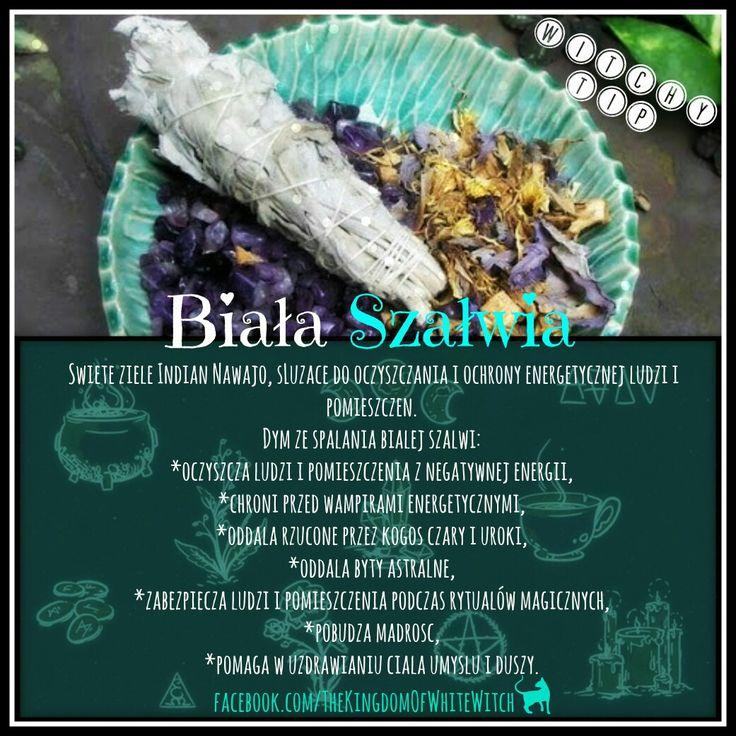#białaszałwia #whitesage #herbs #zioła #ziołolecznictwo #aromaterapia #herbalism…