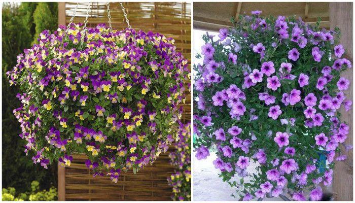 Ампельные растения в саду, выбор и уход