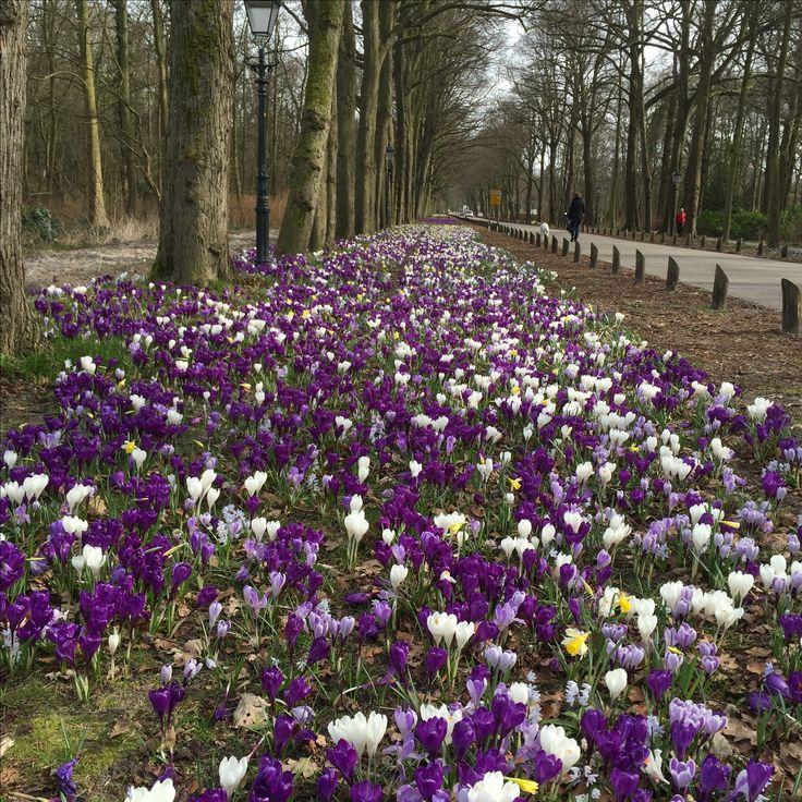 Bij Ockenburg Den Haag