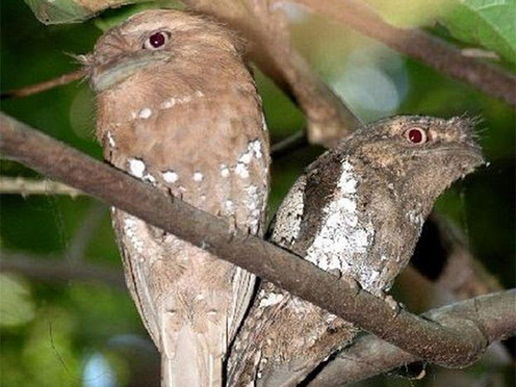 Chimmony Wildlife Sanctuary - in Kerala, India