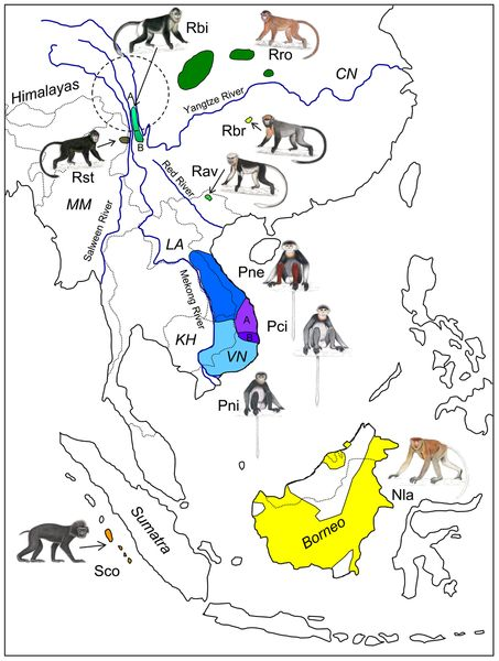 Figure 1.  Idealized distribution map of the ten odd-nosed monkey species in South-east Asia.   Hatched and blue lines indicate count...