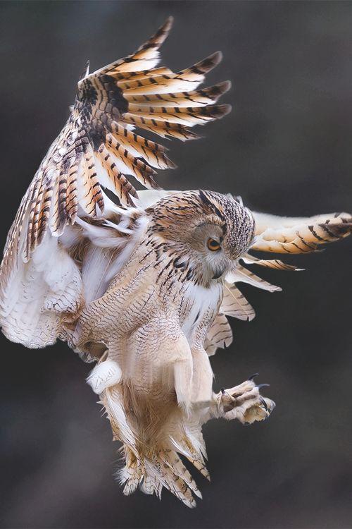 Owl Hunts                                                                                                                                                                                 More