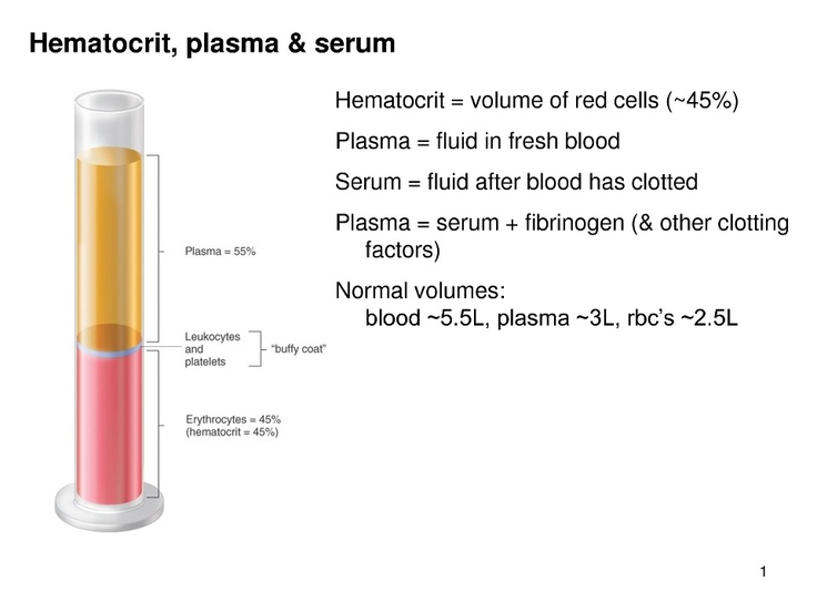 What's in your Blood. Phlebotomy help!