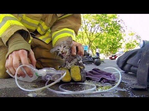Herzzereißend! Kätzchen wird von Feuerwehrmann aus einem brennenden Haus gerettet!