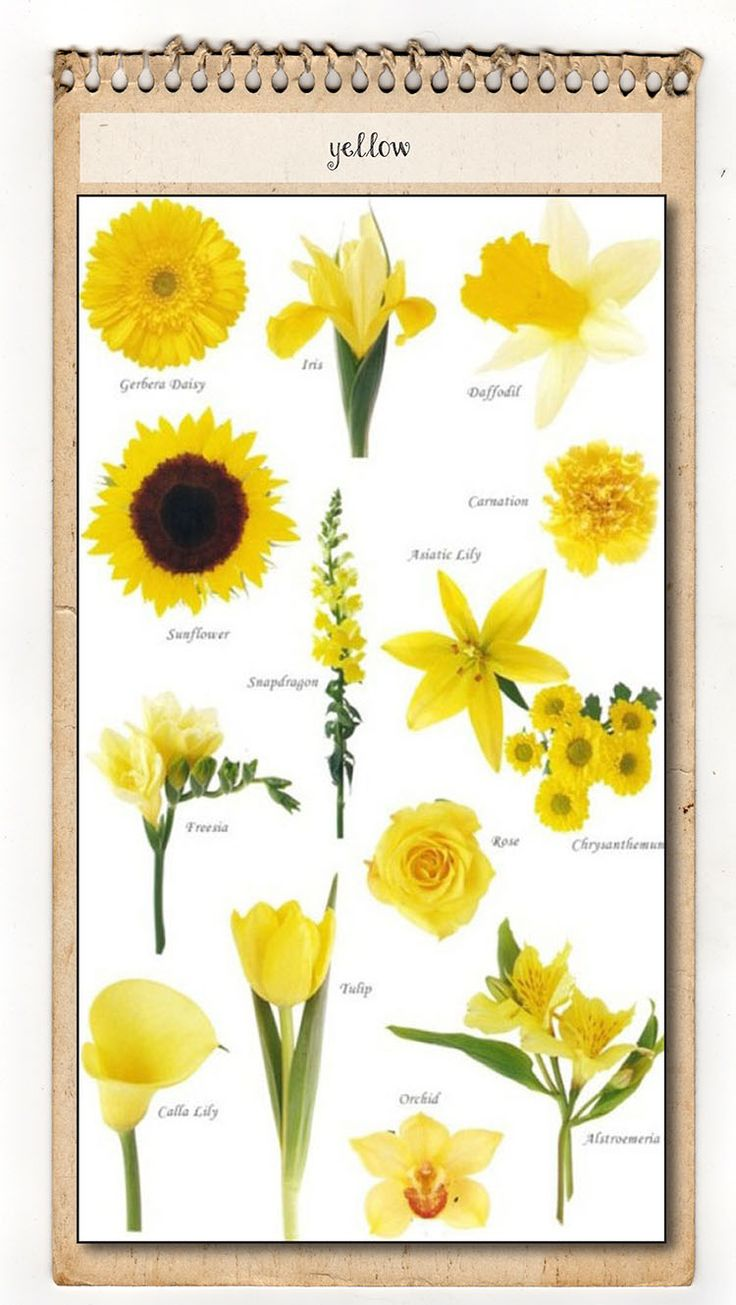 201 best flower names colors images on pinterest floral yellow flower chart mightylinksfo