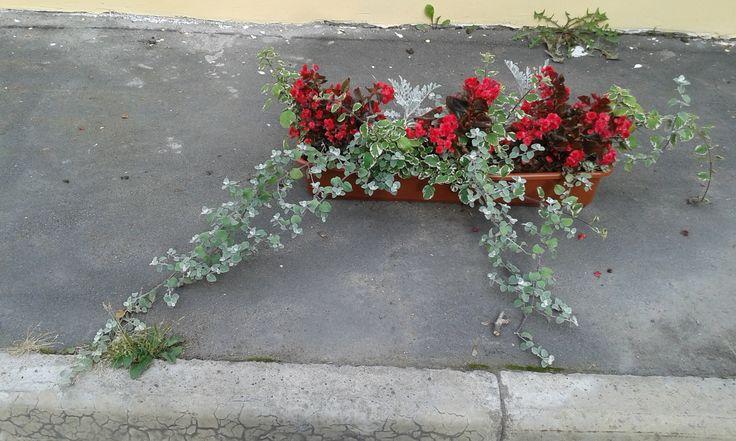 Botanical Garden in St. Petersburg (08.2015)
