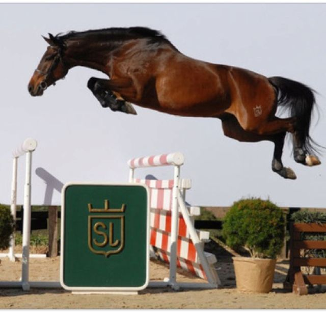 Assuming this horse is free jumping and the photo has not been altered, I sure would like to know who it is and where!