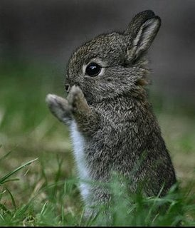 aww: Animal Pictures, Cute Baby, Animal Baby, So Cute, Easter Bunnies, Baby Bunnies, Cute Bunnies, Baby Animal, Sweet Nothings