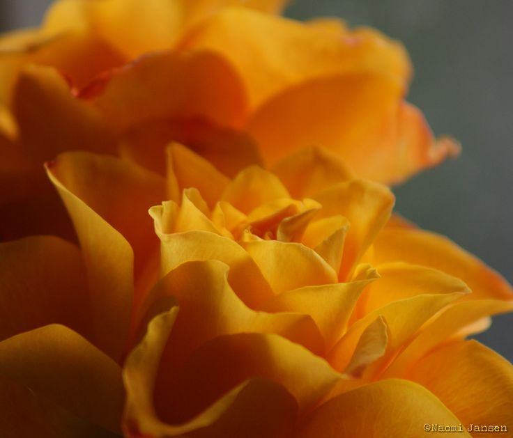 8) Wake up & smell the roses