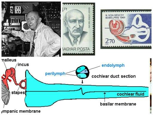 Georg Bekesy Nobel prize winner