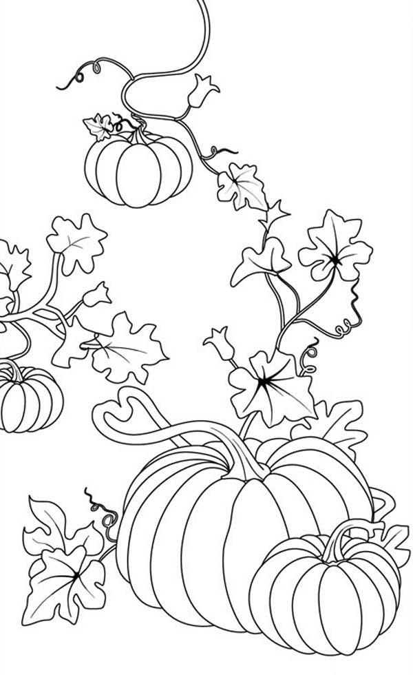 pumpkin and leaves coloring pages - photo#26