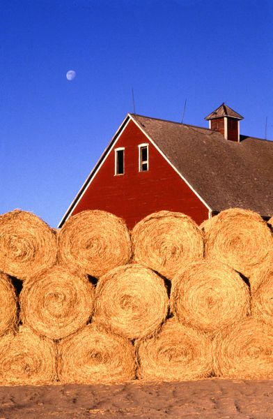 Hay crop: Senior Pictures, Pictures Hay, Country Girls, Country Living, Farms Life, Country Life, Hay Bale, Farms Royalty, Red Barns
