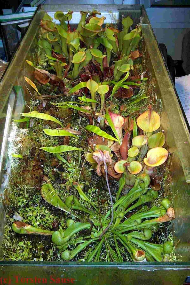 Fleischfressende Pflanzen im Büro