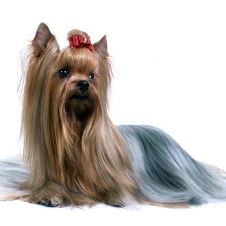 Cachorro (Dog)