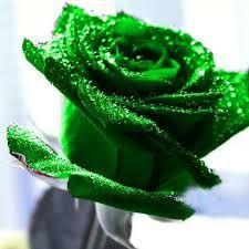 Resultado de imagen de rosas verdes