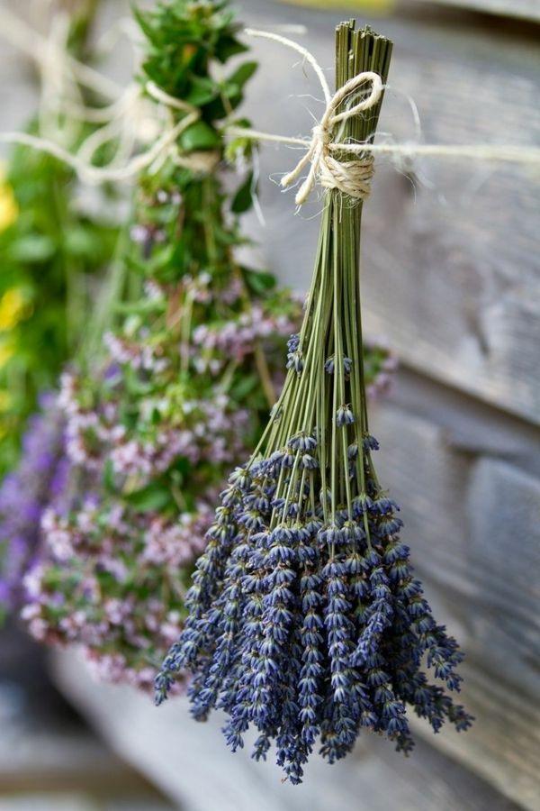 1000+ ideas about Lavendel Wirkung on Pinterest | Lavendelsirup ...