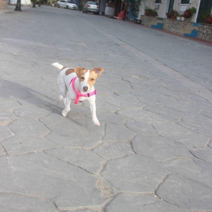 Μήπως έχετε δει τον σκύλο μου; -Που τον χάσατε; Α όχι δεν τον έχασα. Απλά είναι πολύ ωραίος αξίζει να τον δείτε!