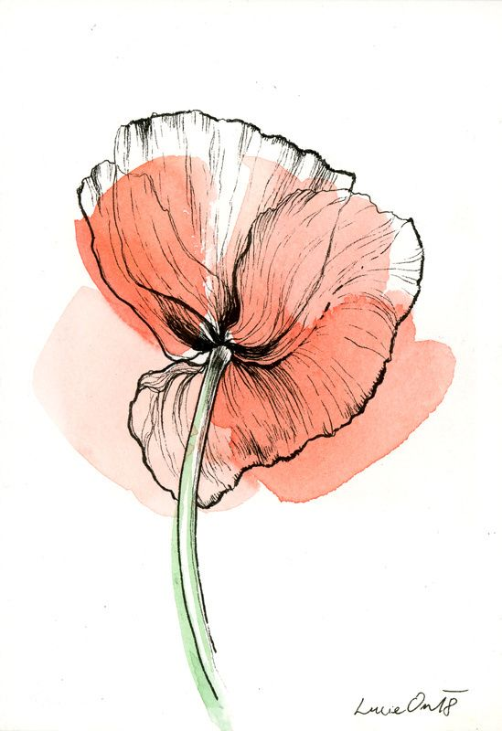 Poppy + Poppy + Technique: + Combined, + Watercolor + and + Inco …