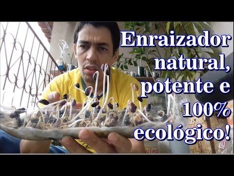 FAZENDO ENRAIZADOR PARA ORQUÍDEAS II - PASSO A PASSO - YouTube