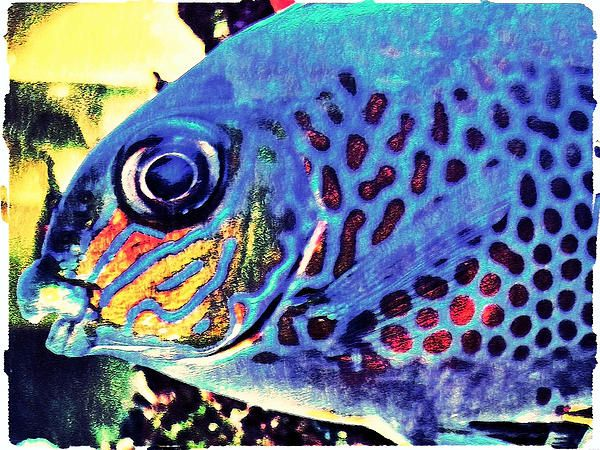 Unique Blue Tropical Fish Artwork - Digital Art by Canadian Artist Miss Dawn  This decorative Canadian art work is available in posters, canvas, framed, acrylic, etc.  Beautiful wall prints at Affordable prices  Purchase here --> http://fineartamerica.com/featured/blue-tropical-fish-miss-dawn.html?viewall=true  Check out more of Miss Dawn's artwork here --> http://dawn-mercer.artistwebsites.com