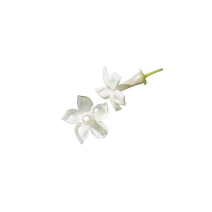 Brides.com: . Stephanotis. This elegant white bloom is often seen on the lapel of a tuxedo.  Browse more stephanotis flower ideas.