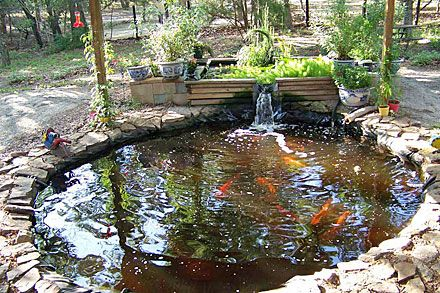 Aquaponic pond design google search aquaponics ideas for Koi pond aquaponics