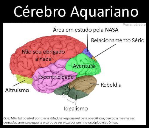 cérebro aquariano
