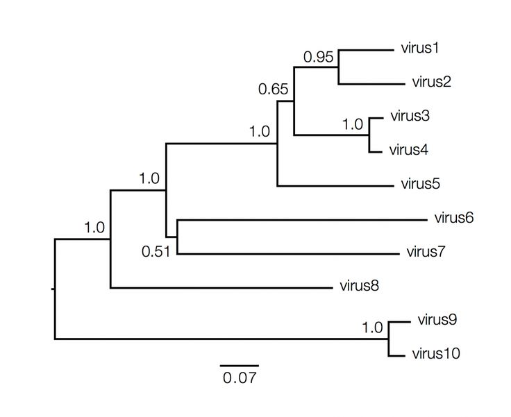 How to read/construct phylogenetic trees.