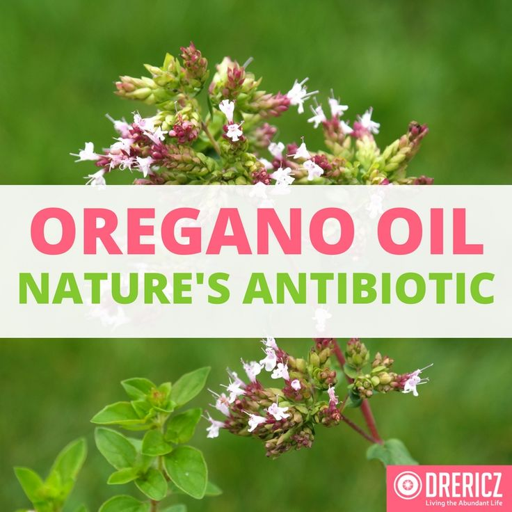 dozens of other studies confirm that oregano oil can be used instead of deadly antibiotics for