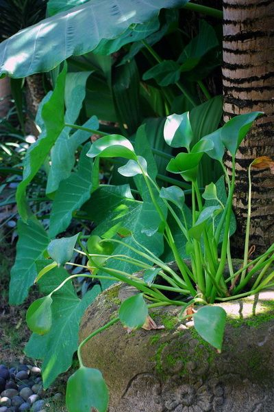 12 best Villa Batavia, Bali images on Pinterest | Landscape ... - garden design companies