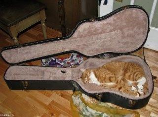 :3: Music, Kitten, Animals, Funny Cats, Pet, Kitties, Cat Sleeping, Kitty, Guitar Case