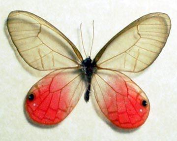 Yuka wing fragrance kosupure - 5 3