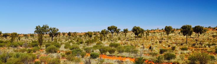 Rare Waddi trees on the Old Ghan Railway track