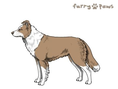 Furry Paws // WCH Kip's Folsom Prison Blues [1.635] 12.0 *BoB*'s Kennel
