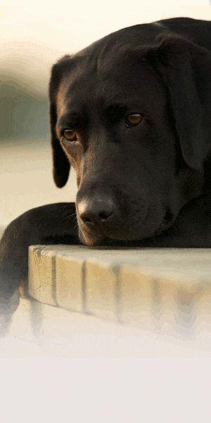 comparateur d'assurance pour chien