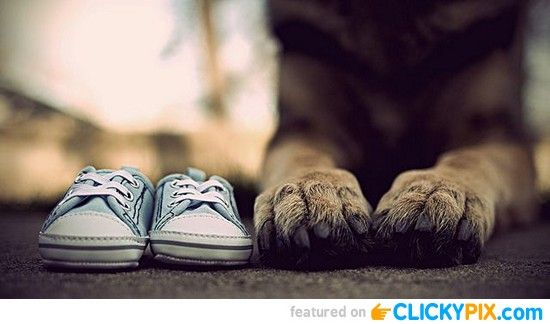 Baby shoes (of gender) & puppy paws! 15 Creative Pregnancy Announcment Ideas