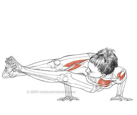 Charmant Yoga Posen Anatomie Ideen - Anatomie Von Menschlichen ...