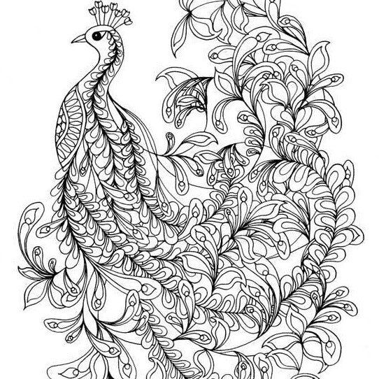 104 best peacock pages images on Pinterest | Coloring books ...