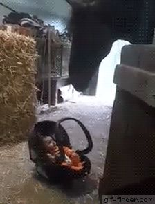 Horse Babysits Baby   Gif Finder – Find and Share funny animated gifs