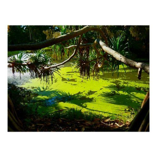 Poster Green Pond