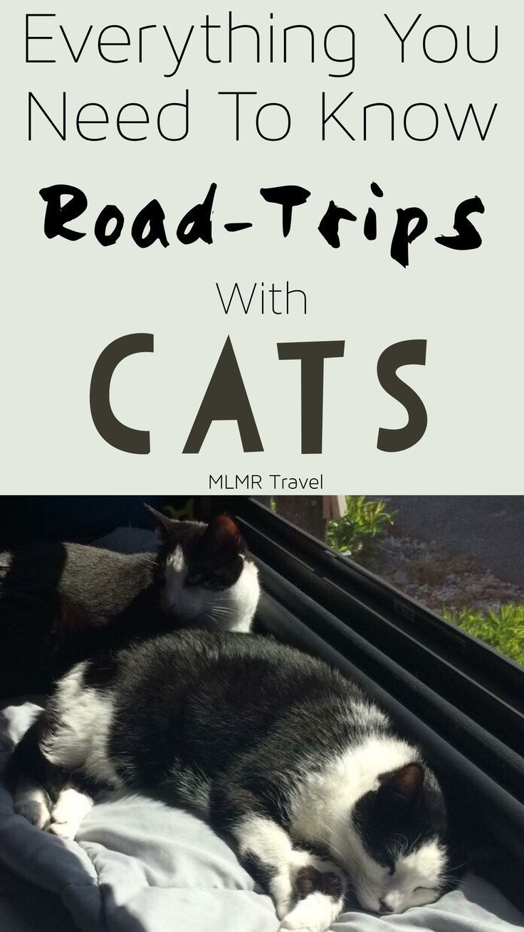 Traveling With Cats In A Car Long Distance Traveling Cats Cat