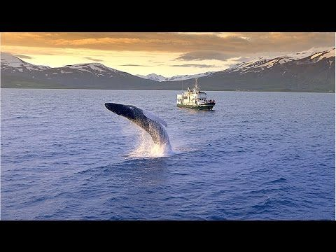 Caught On The Web: whale watching in Iceland; http://caughtontheweb.blogspot.com/2015/10/whale-watching-in-iceland.html